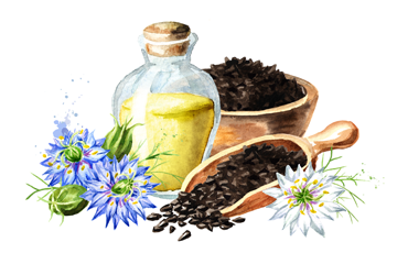 Що ми знаємо про плоди чорного кмину Nigella sativa